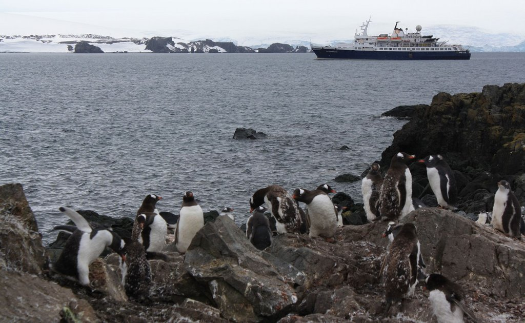 Las 13 mejores fotos de un día en Antártica