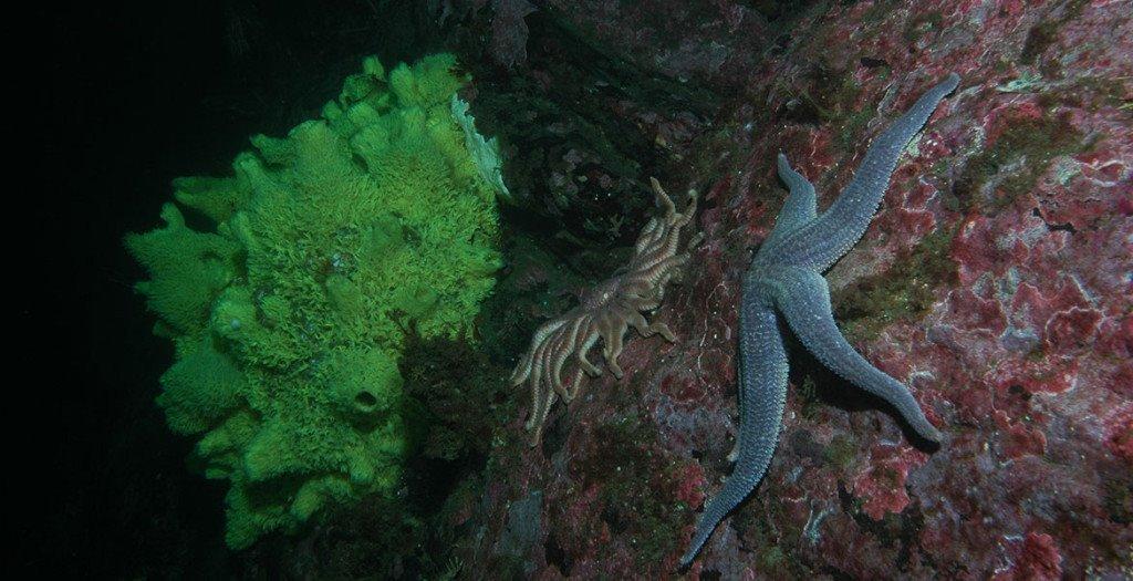 Dirk Schories - Patagonia Diving