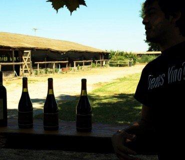 Valle de Cachapoal: naturaleza, historia y vino, mucho vino